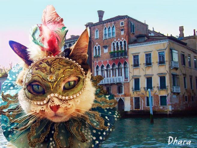 """Résultat de recherche d'images pour """"chat Venise"""""""